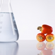 Renewable, CNSL type, high biocontent diluents and resins